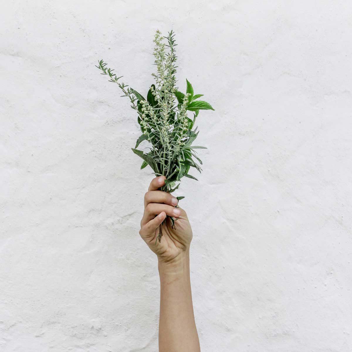 herbal-medicine-in-hand